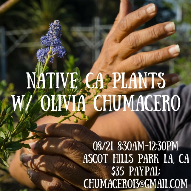 NATIVE CA PLANTSW- OLIVIA CHUMACERO-2